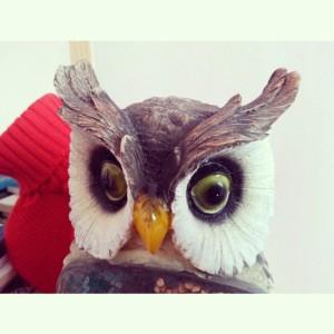 baykus1